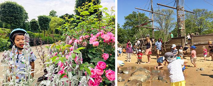 ロンドン子連れ観光スポット リージェンツパークのバラ園とロンドン動物園