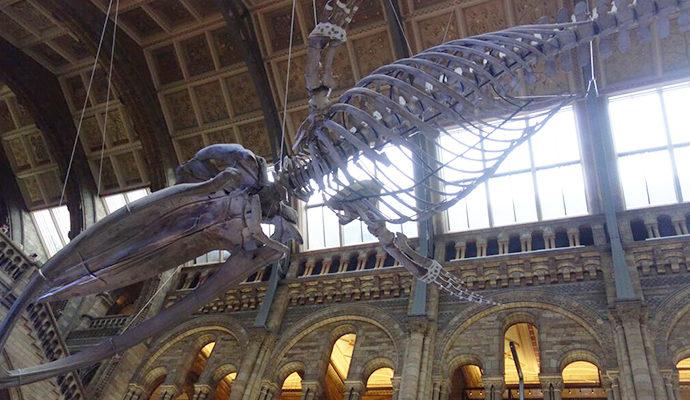 ロンドン子連れ観光スポット  ロンドン自然史博物館 Natural History Museum
