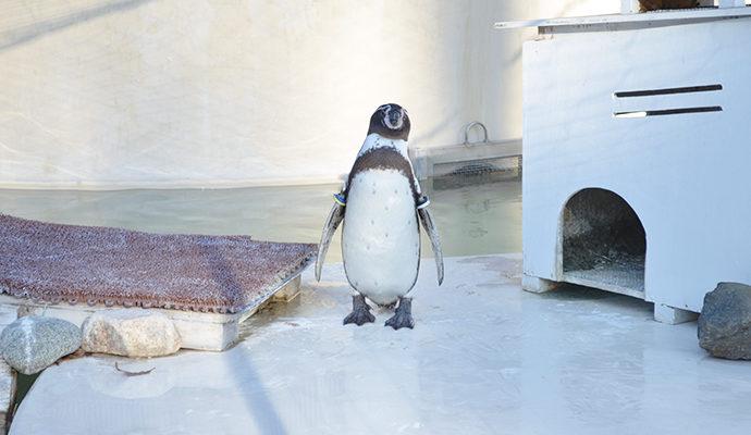 井の頭自然文化園 ペンギン