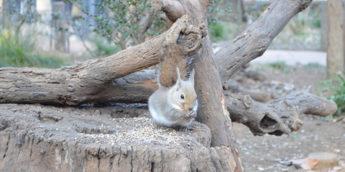 【吉祥寺・動物園】リスやモルモットとふれあえる「井の頭自然文化園」