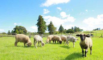 【千葉】「マザー牧場」へ行こう!カピバラや羊との触れ合い、イルミネーションイベントも。