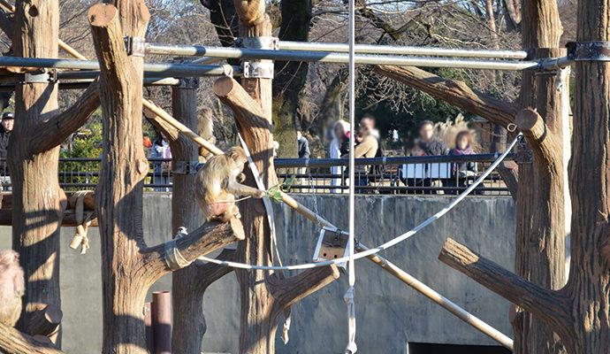 井の頭自然文化園 サル
